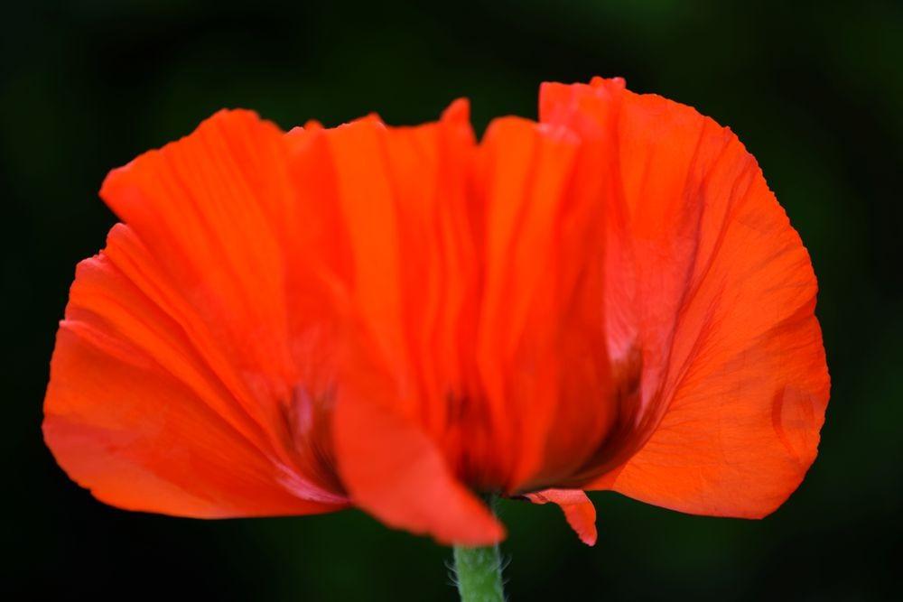 花卉日记-72_图1-16