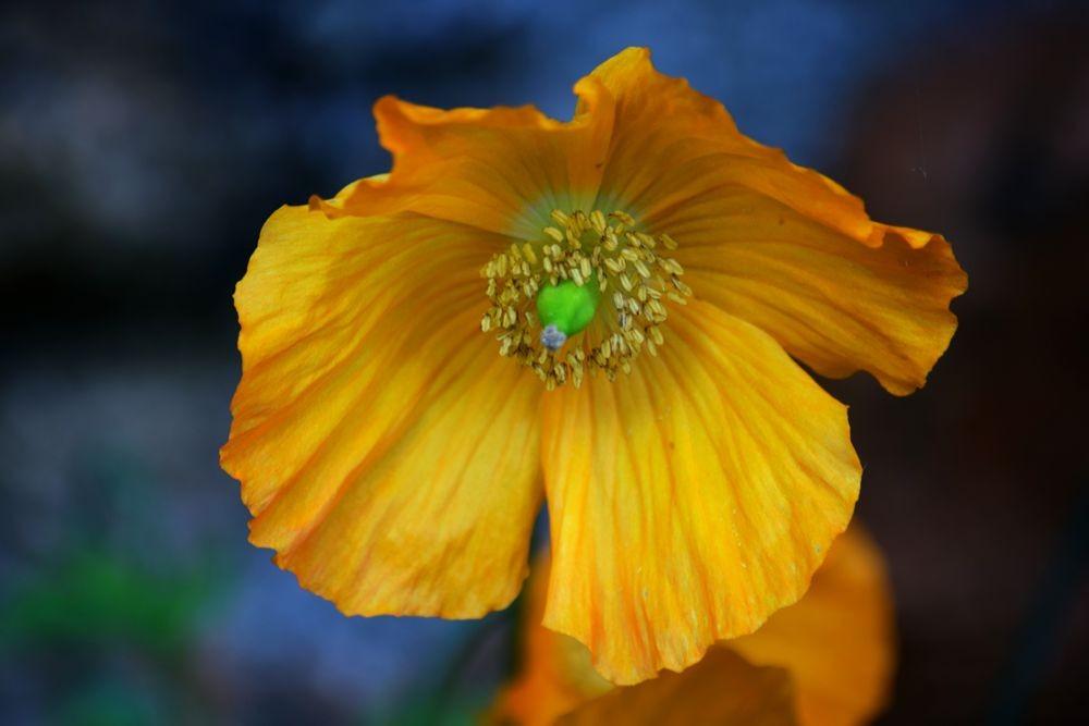 花卉日记-72_图1-17