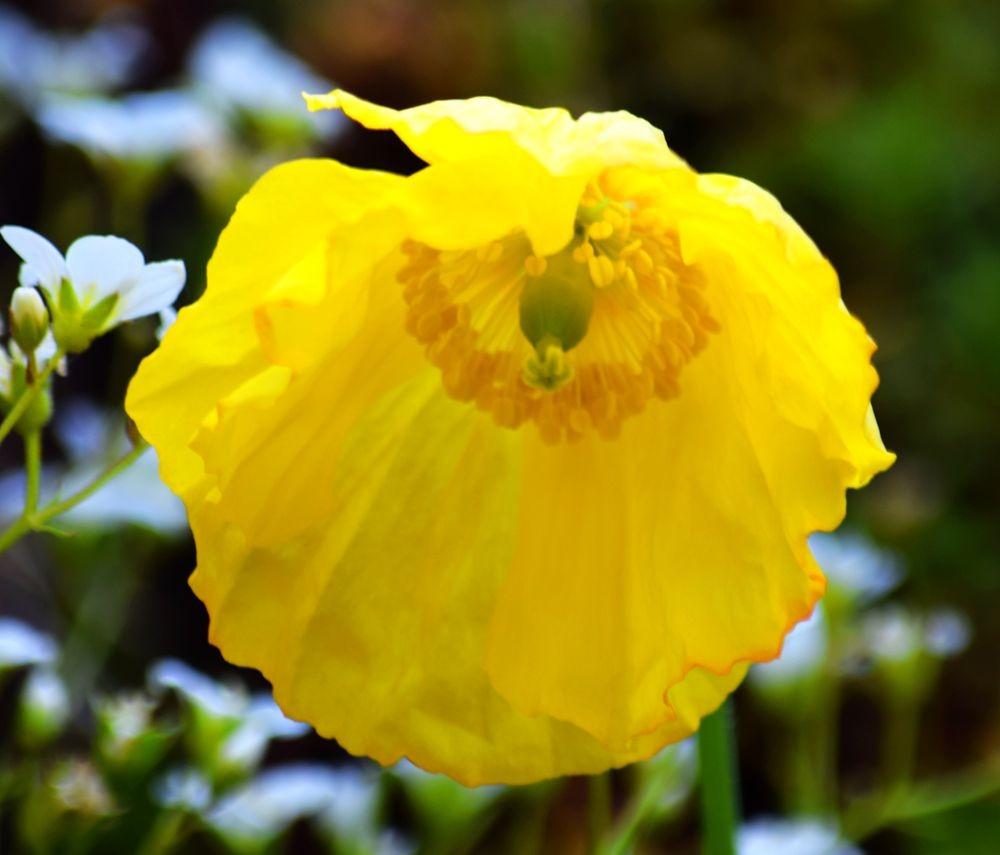 花卉日记-72_图1-18