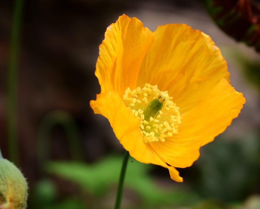 花卉日记-72_图1-20