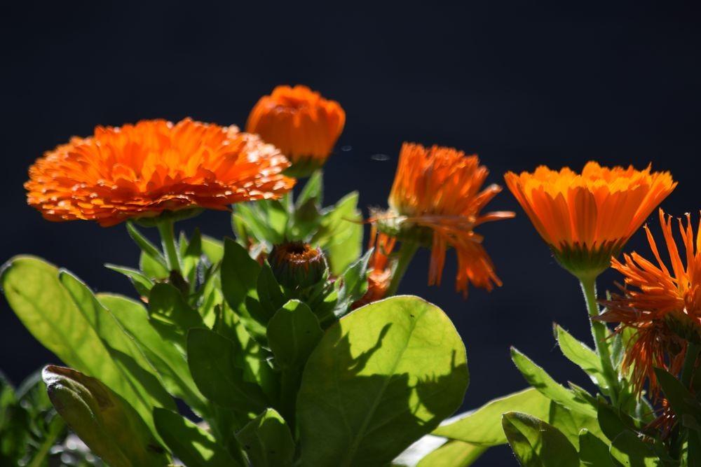 花卉日记-72_图1-21