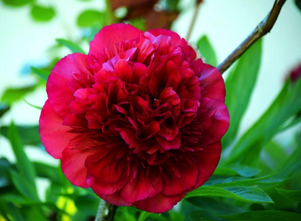 花卉日记-72_图1-22