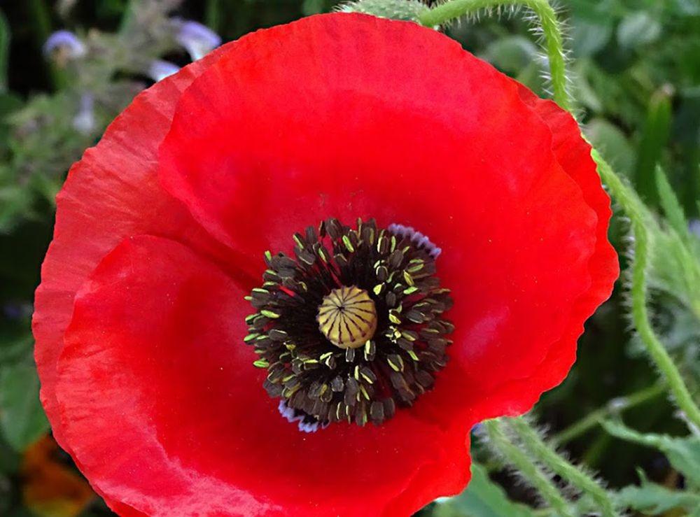 花卉日记-73_图1-1