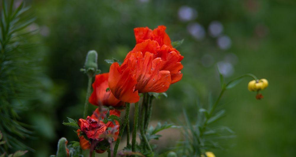 花卉日记-73_图1-3