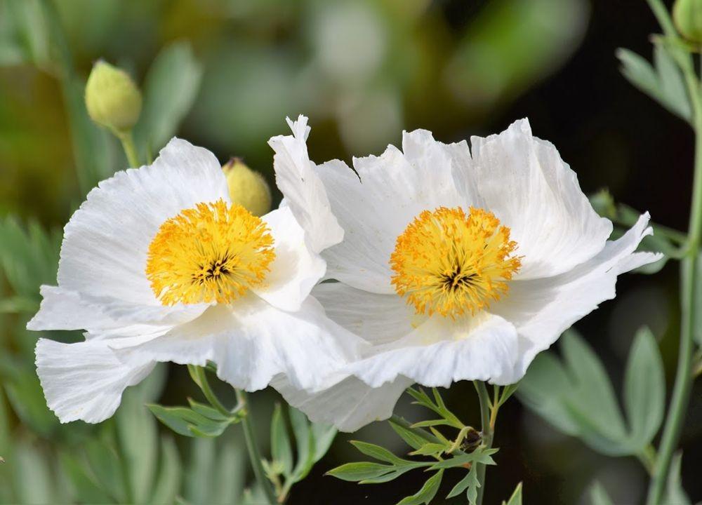 花卉日记-73_图1-4