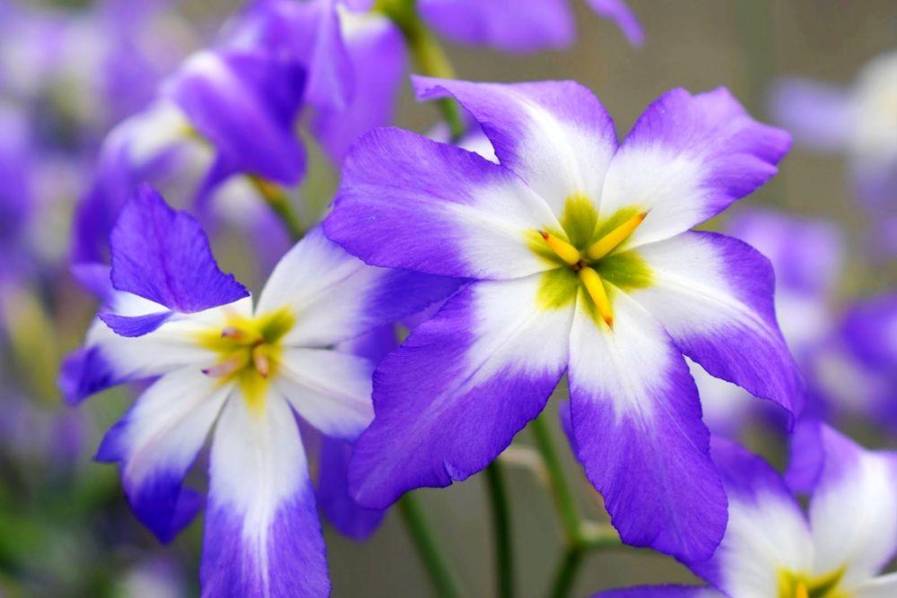 花卉日记-73_图1-5