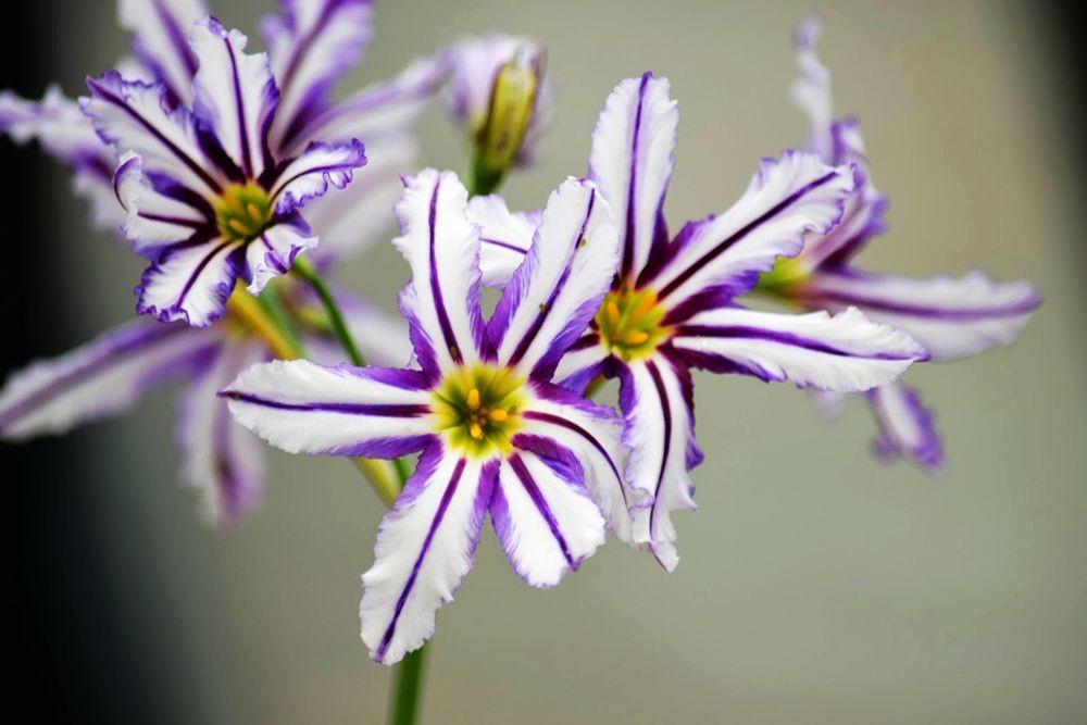 花卉日记-73_图1-6