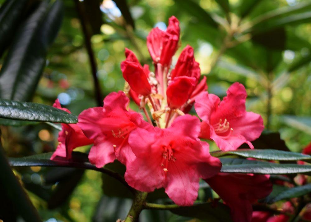 花卉日记-73_图1-12