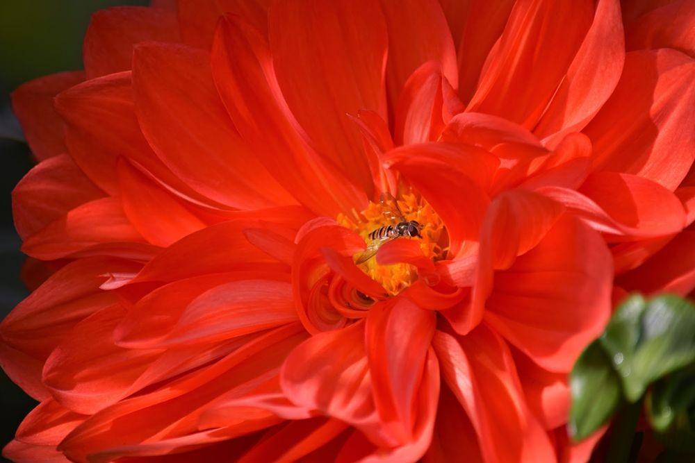花卉日记-73_图1-13