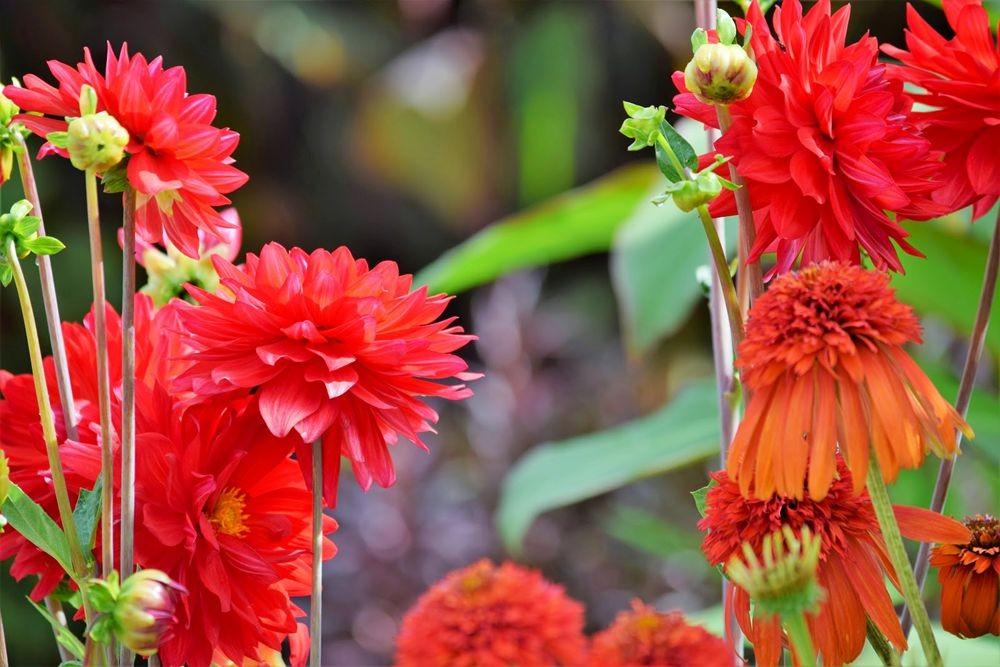 花卉日记-73_图1-14
