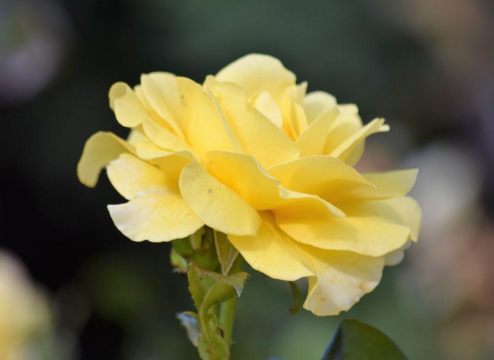 花卉日记-73_图1-15