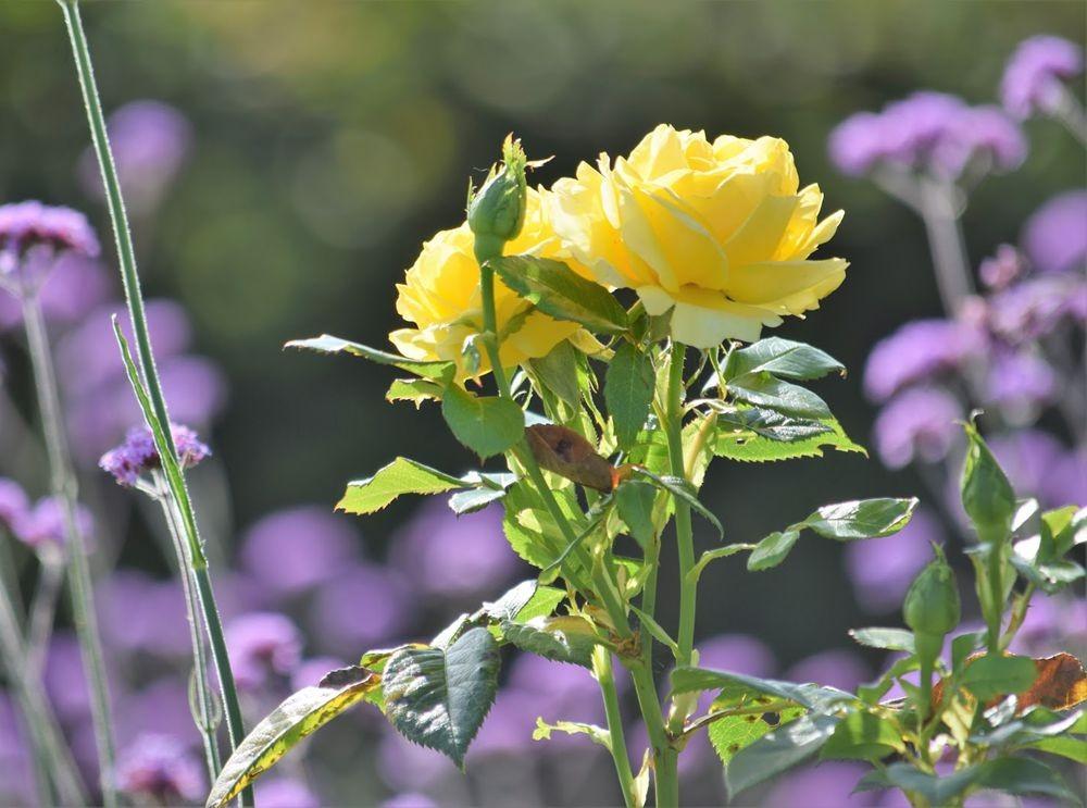 花卉日记-73_图1-16