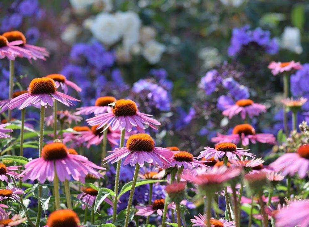 花卉日记-73_图1-17