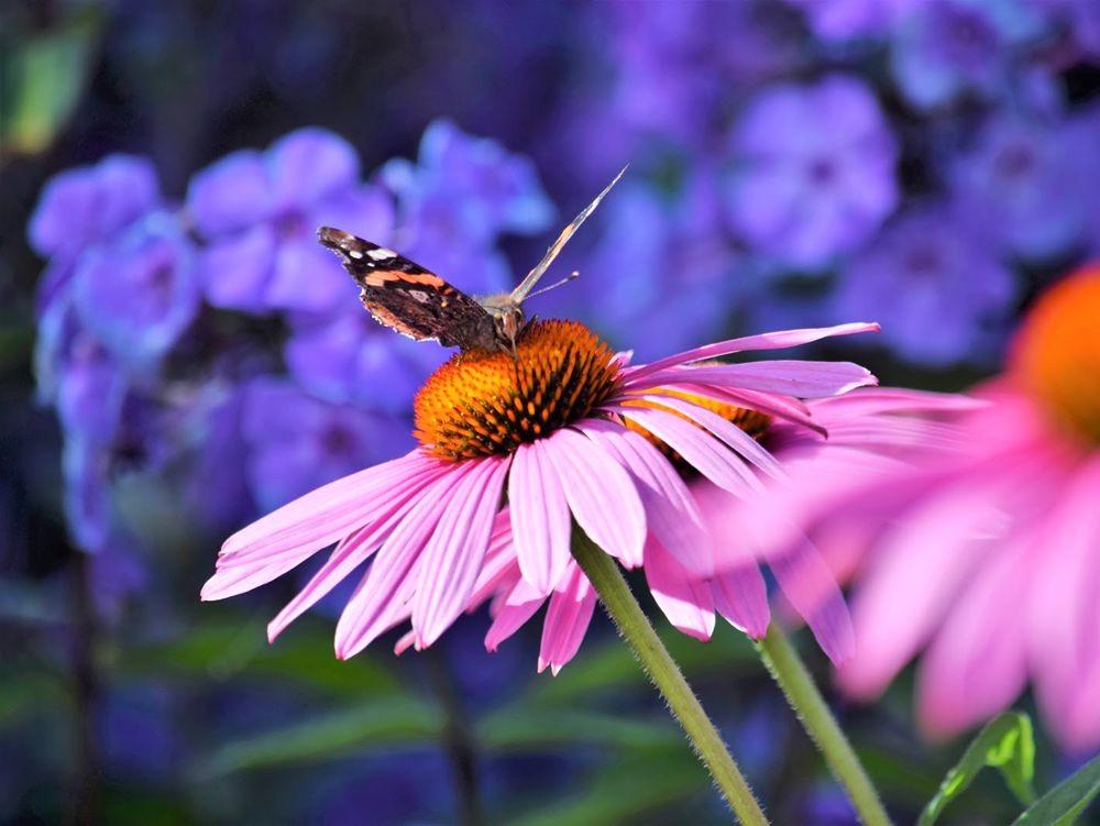 花卉日记-73_图1-18