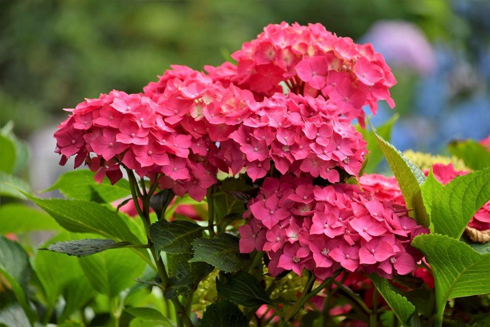 花卉日记-73_图1-21
