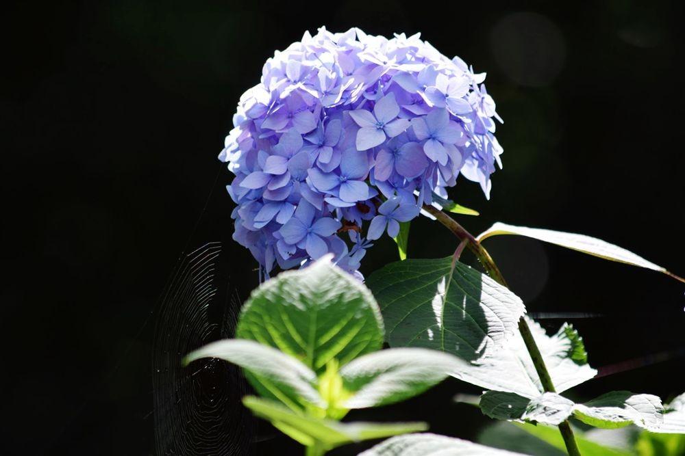 花卉日记-73_图1-22