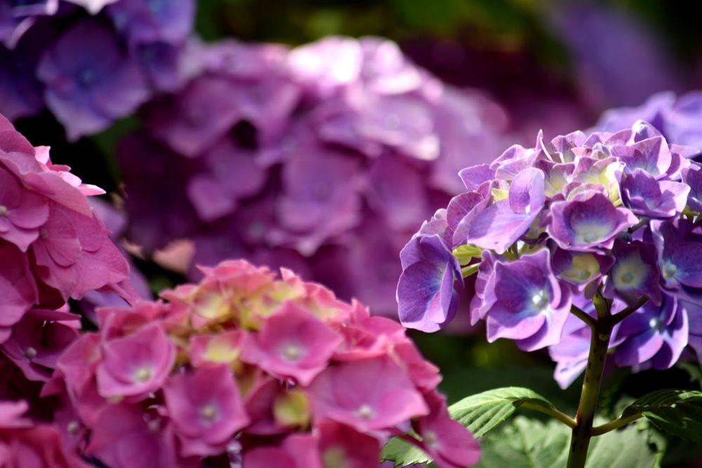 花卉日记-73_图1-23