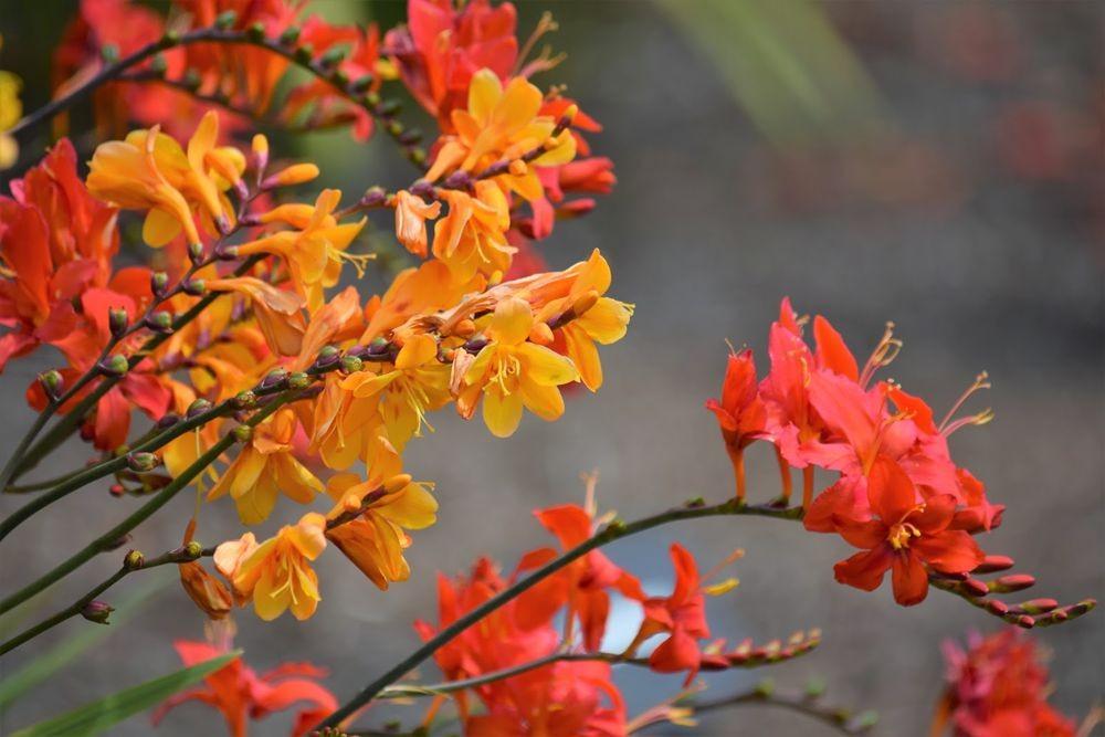 花卉日记-73_图1-25