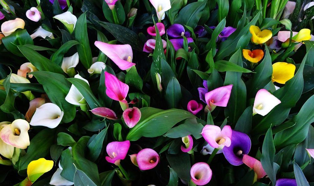 花卉日记-73_图1-26