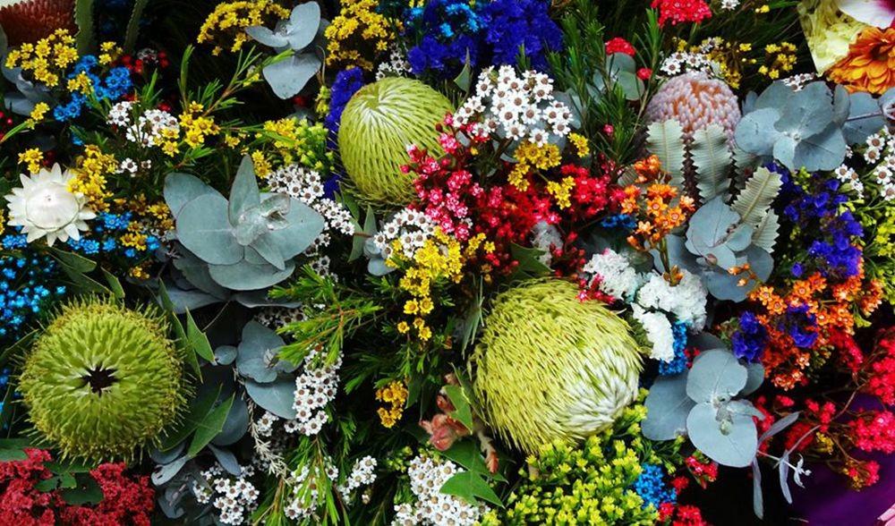花卉日记-73_图1-27