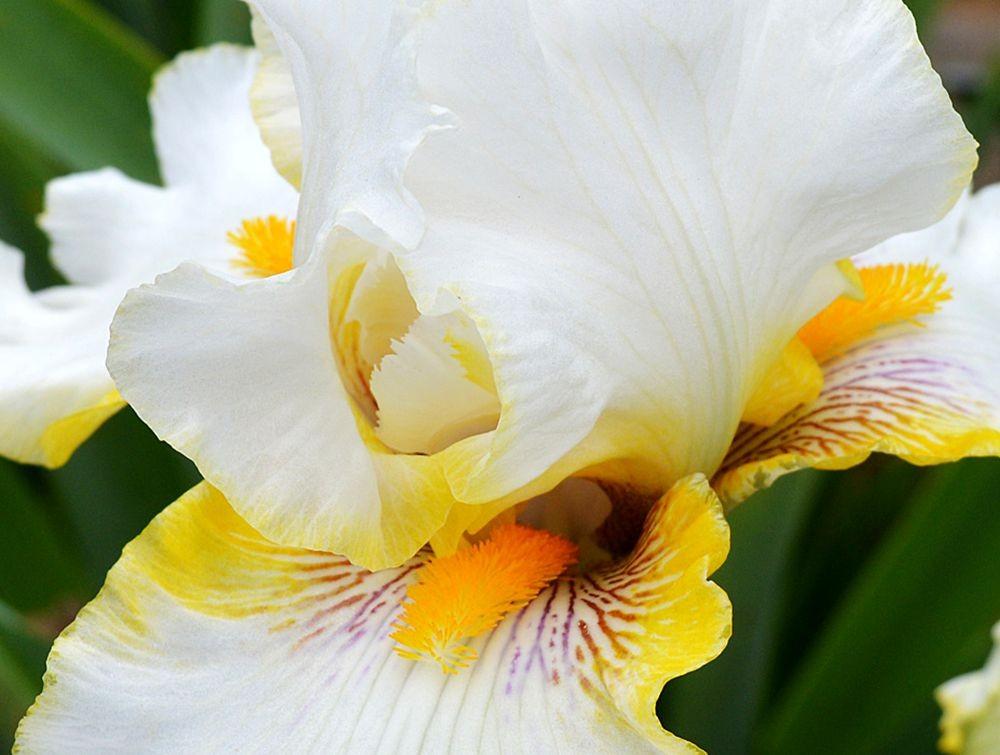 戴安娜福特花园之鸢尾花-2_图1-14
