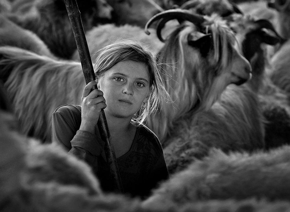特兰西瓦尼亚的牧羊区_图1-2