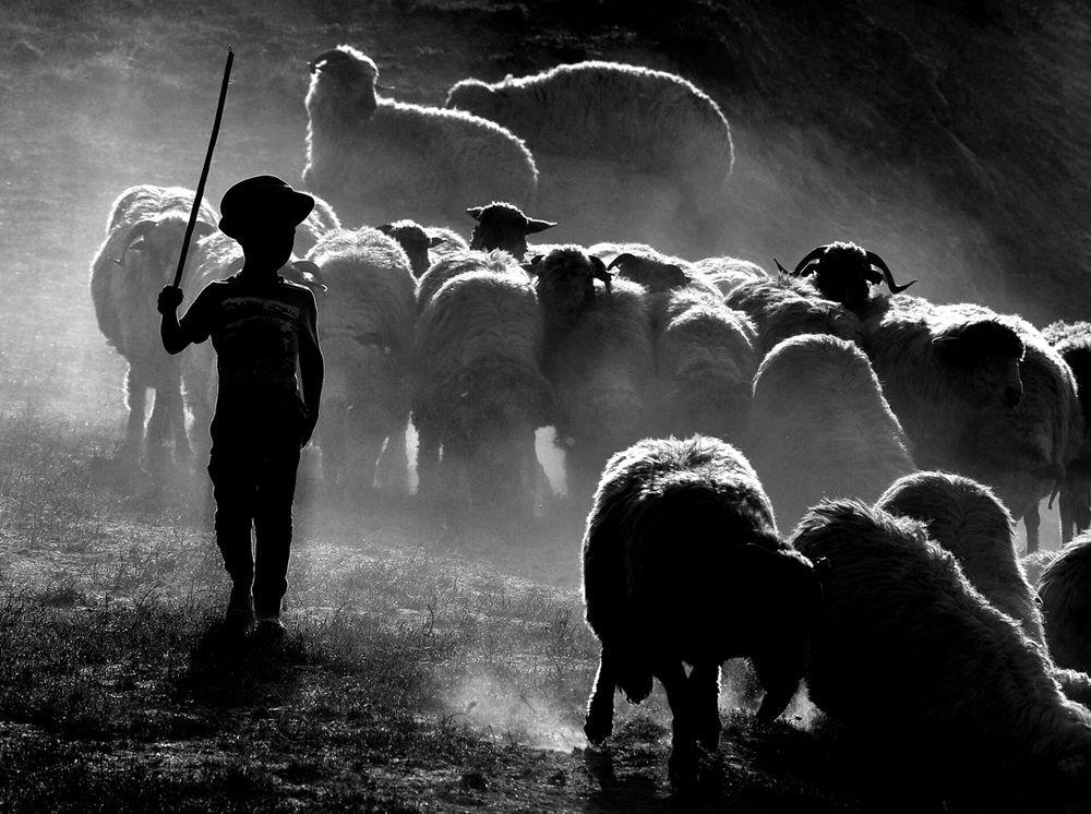 特兰西瓦尼亚的牧羊区_图1-6
