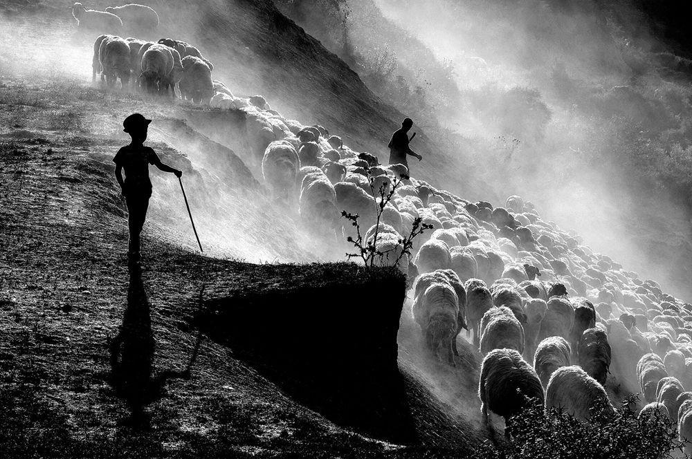 特兰西瓦尼亚的牧羊区_图1-8