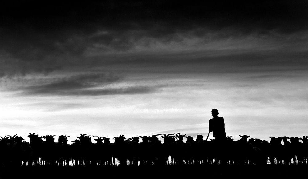 特兰西瓦尼亚的牧羊区_图1-9