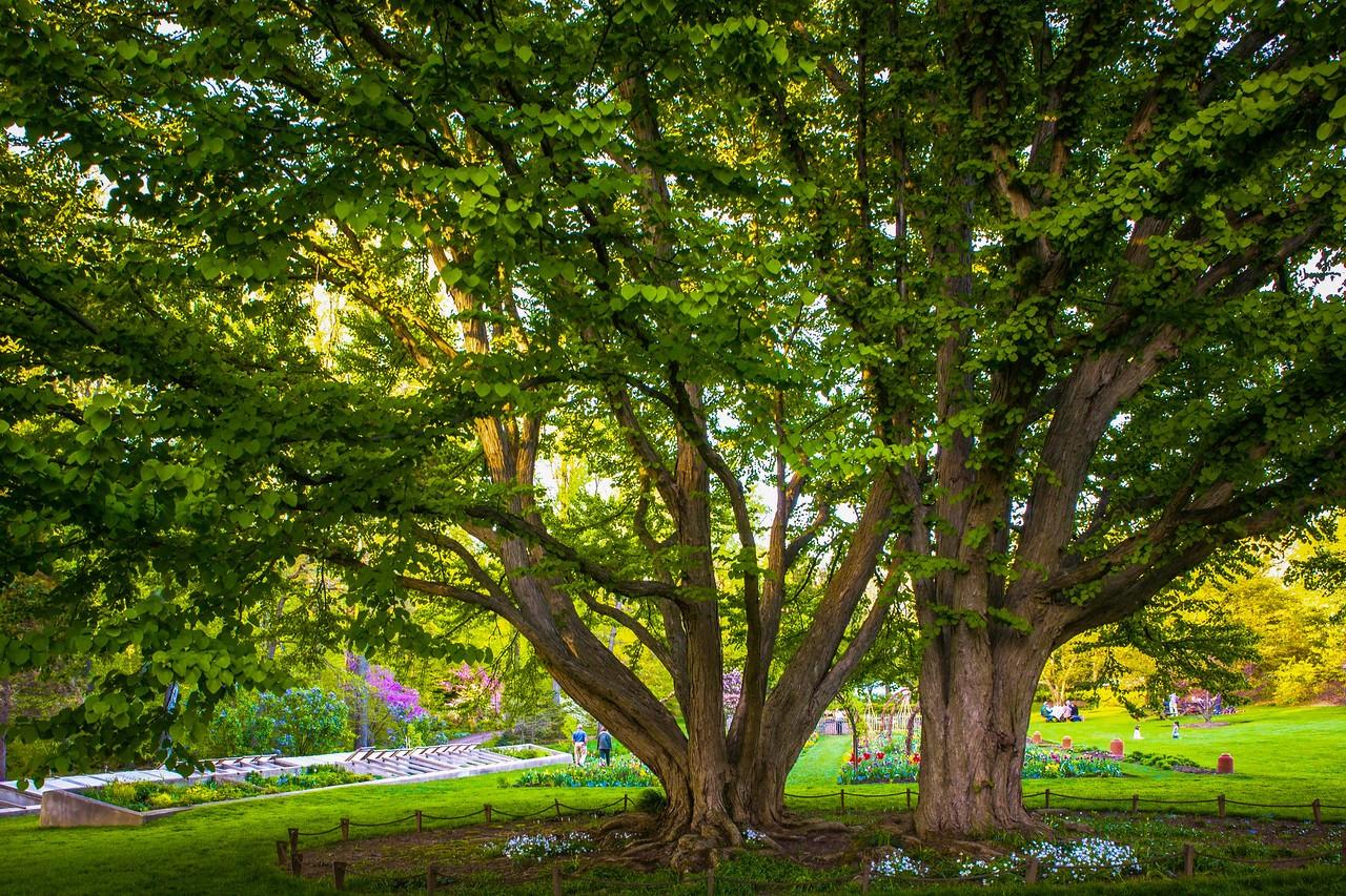 Chanticleer花园,树上盆景_图1-7