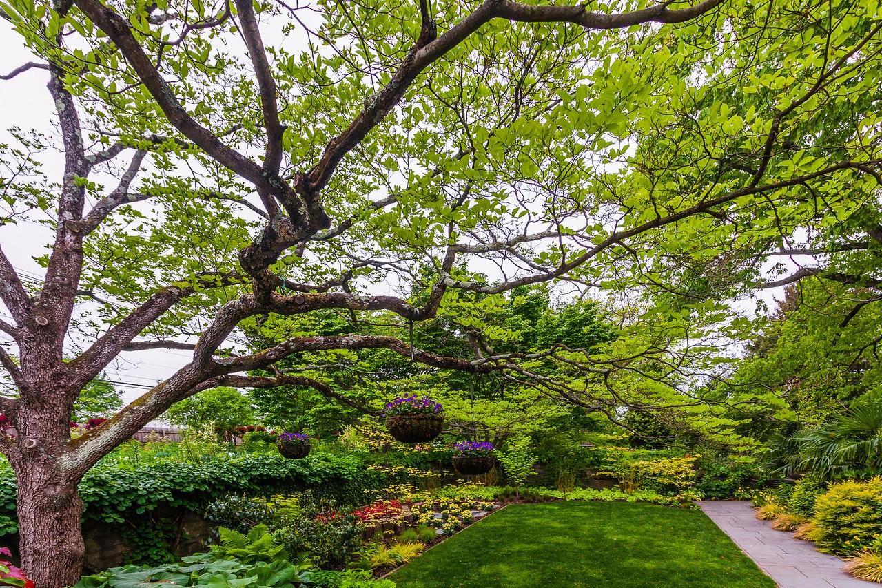 Chanticleer花园,树上盆景_图1-3
