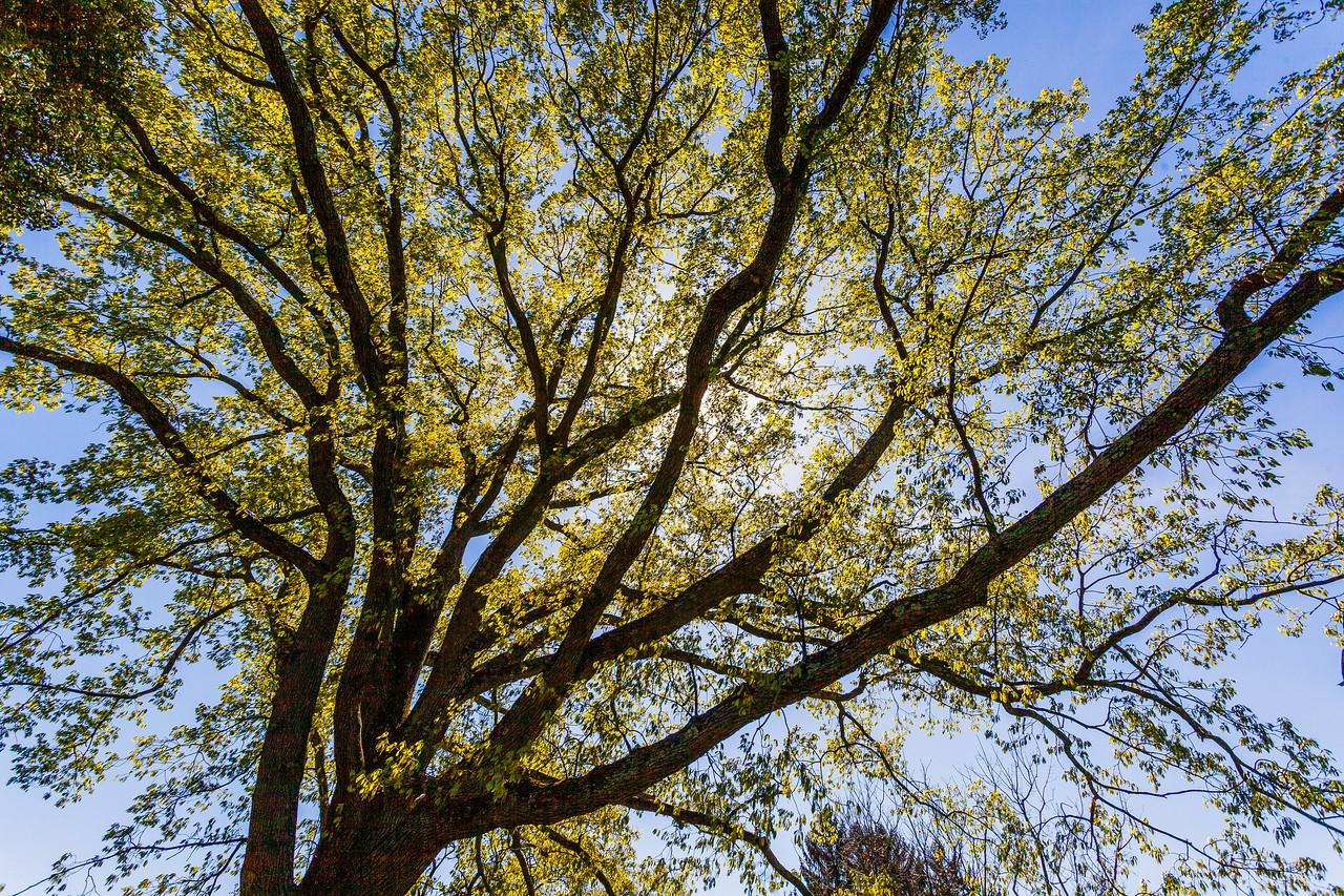 Chanticleer花园,树上盆景_图1-5