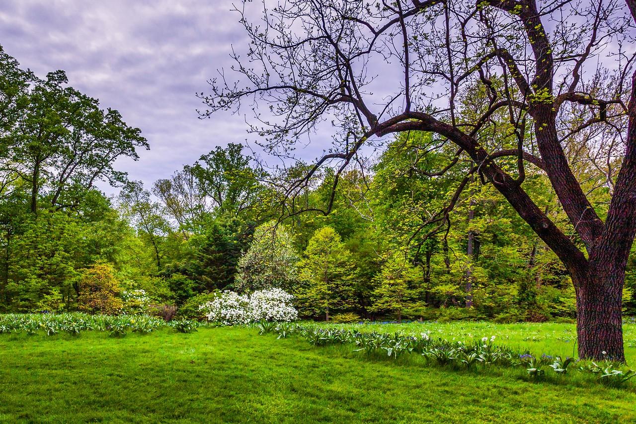 Chanticleer花园,树上盆景_图1-10