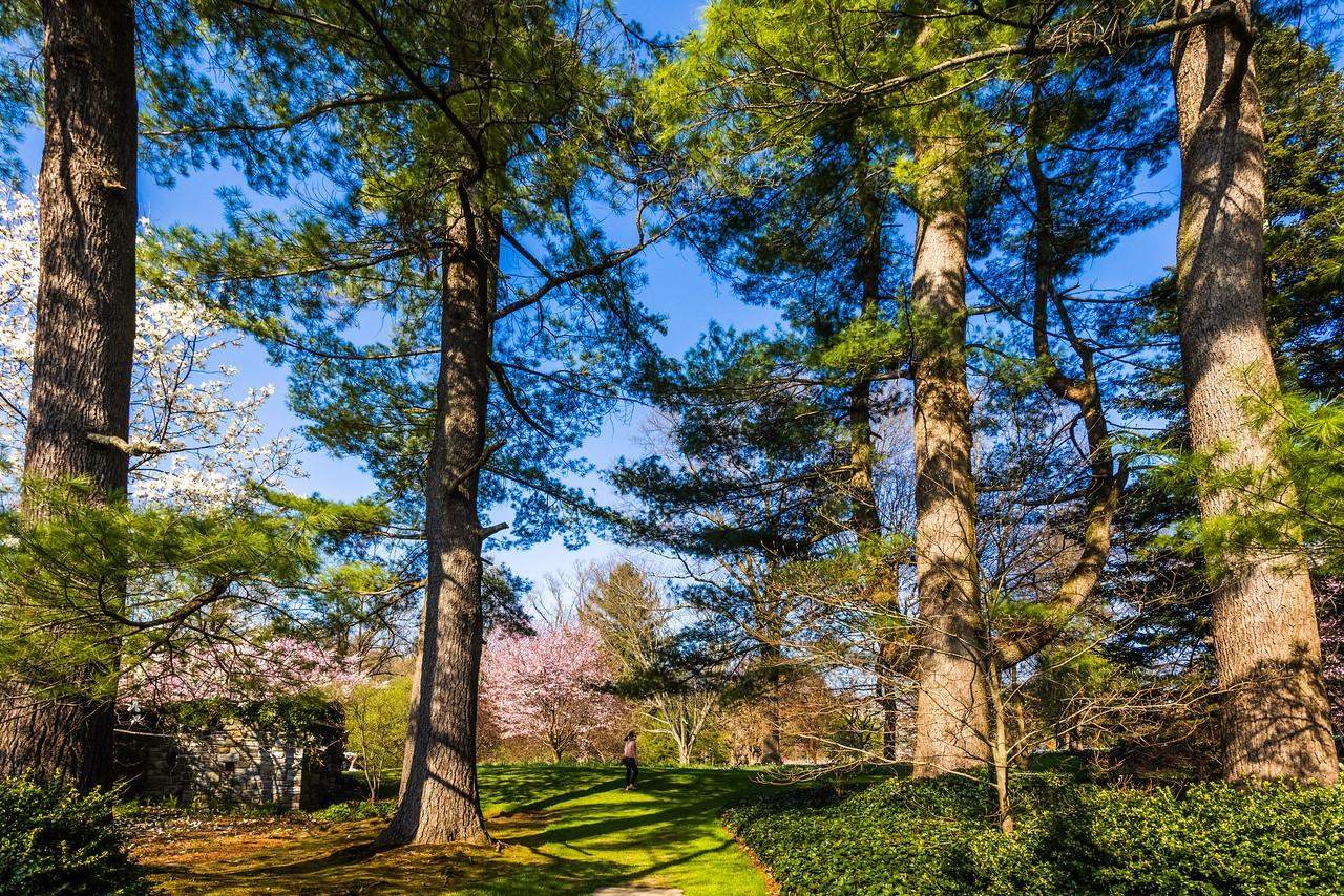 Chanticleer花园,树上盆景_图1-9