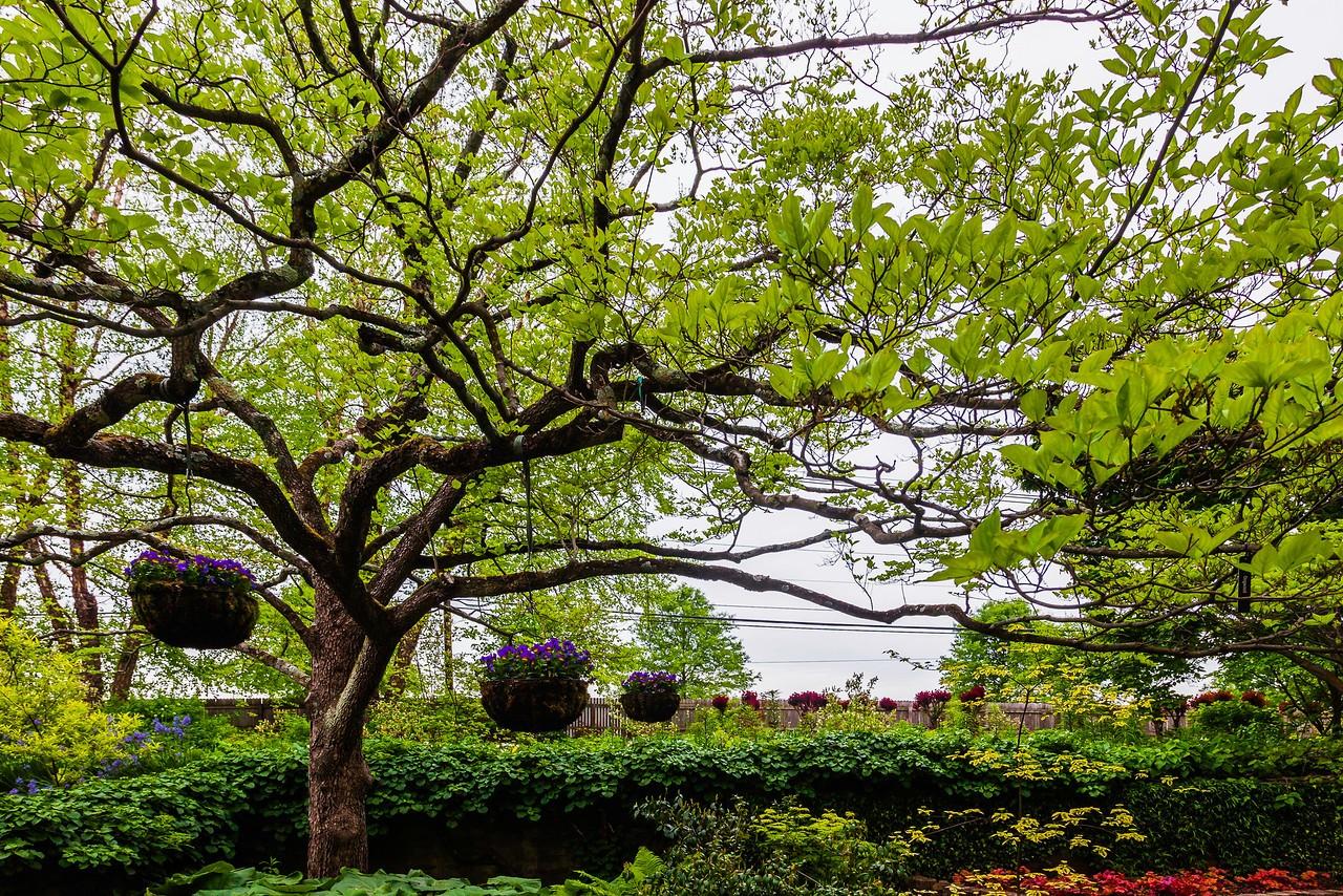 Chanticleer花园,树上盆景_图1-14