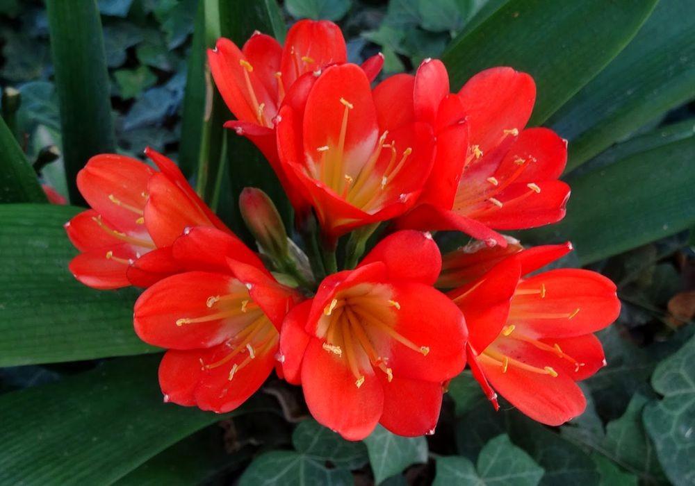 花卉日记-74_图1-1