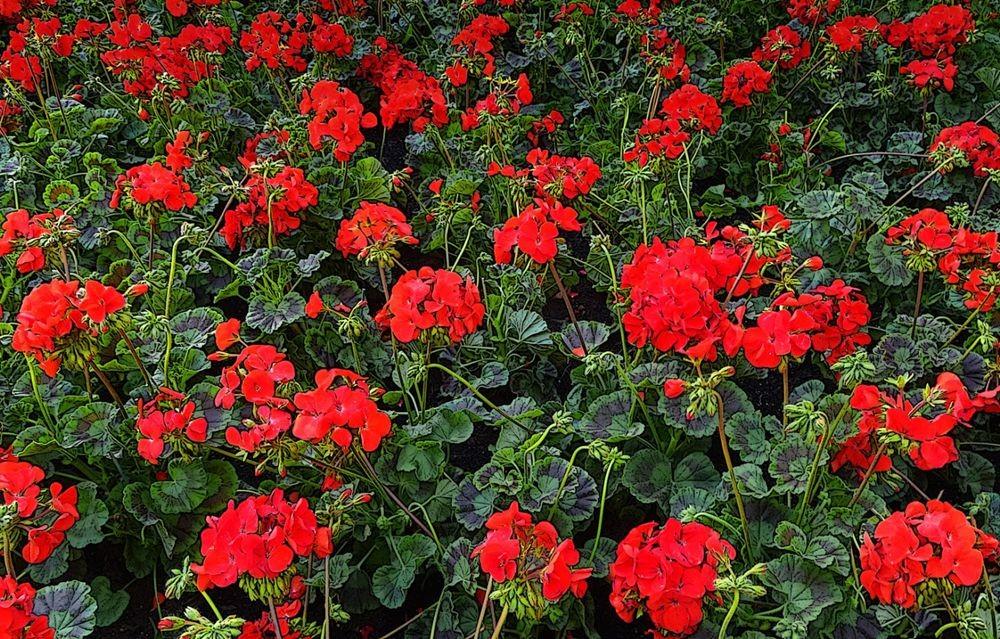 花卉日记-74_图1-3