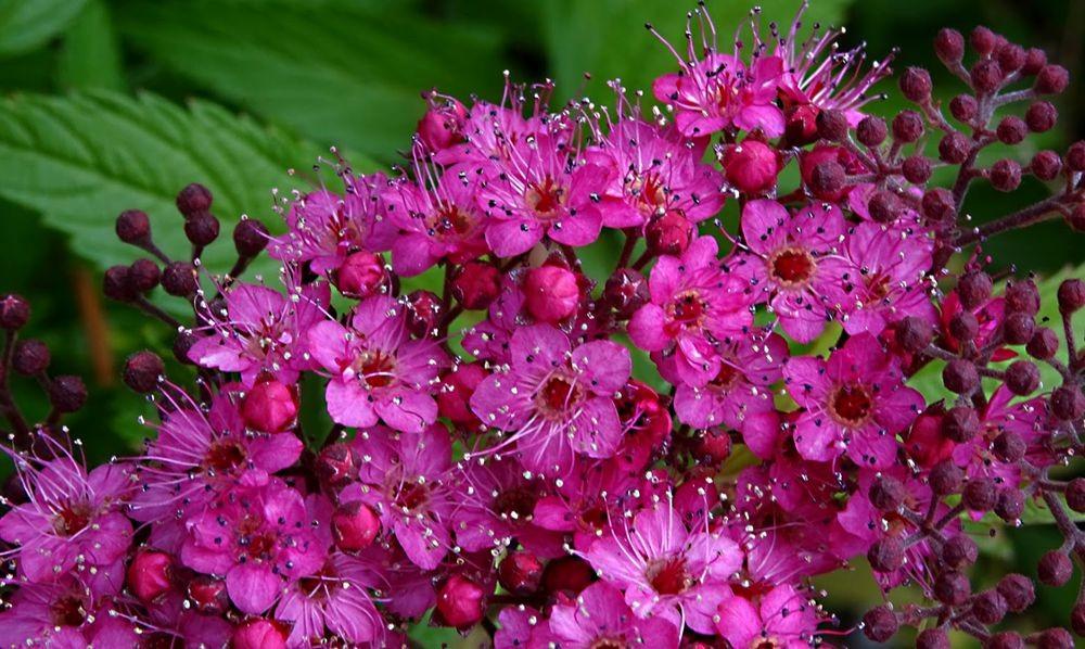 花卉日记-74_图1-4