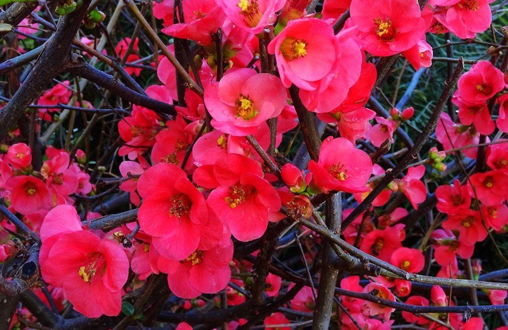 花卉日记-74_图1-8