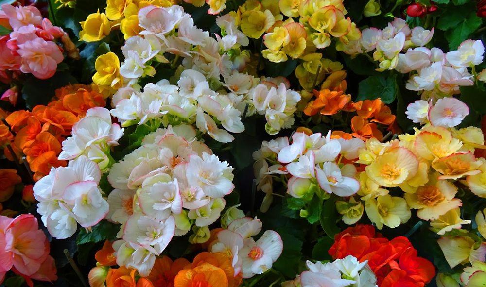 花卉日记-74_图1-9