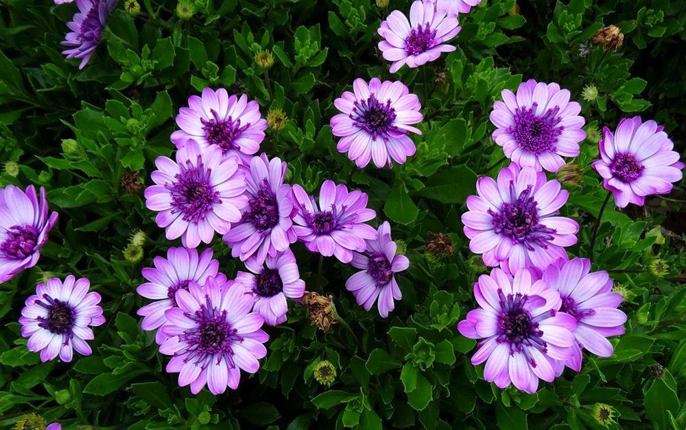 花卉日记-74_图1-10