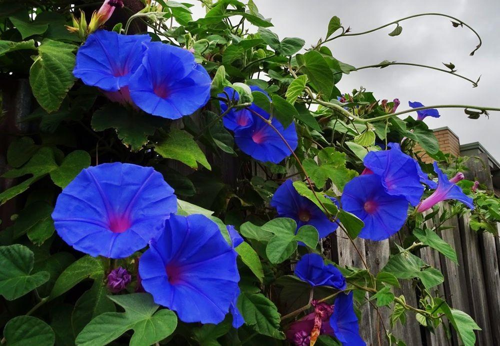 花卉日记-74_图1-11