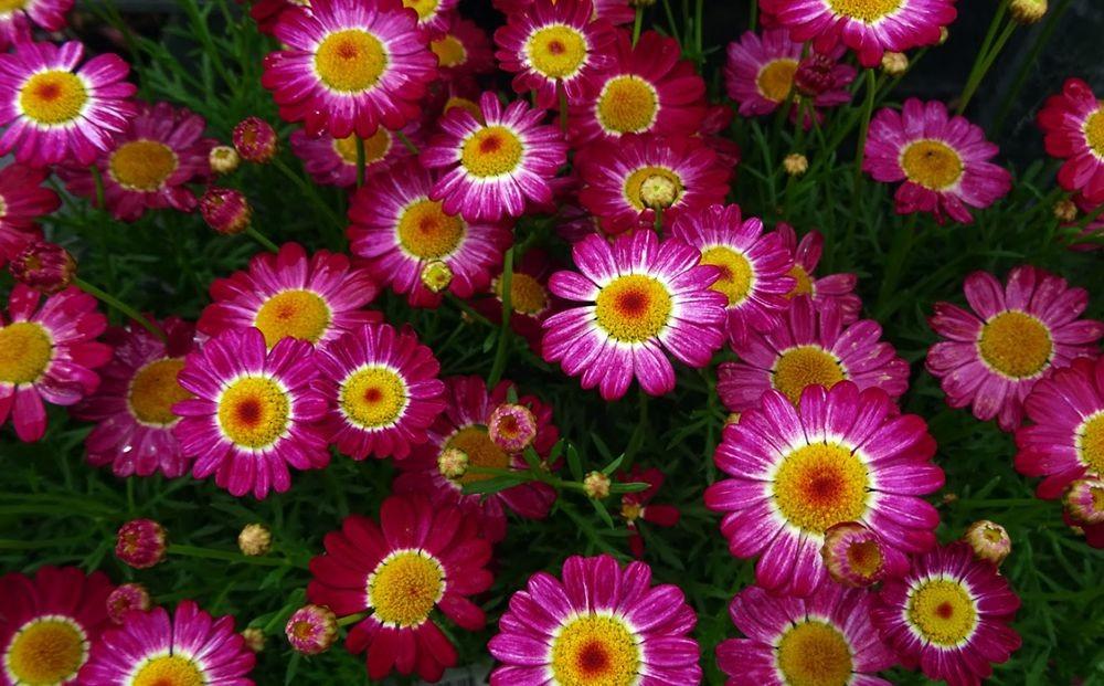 花卉日记-74_图1-12