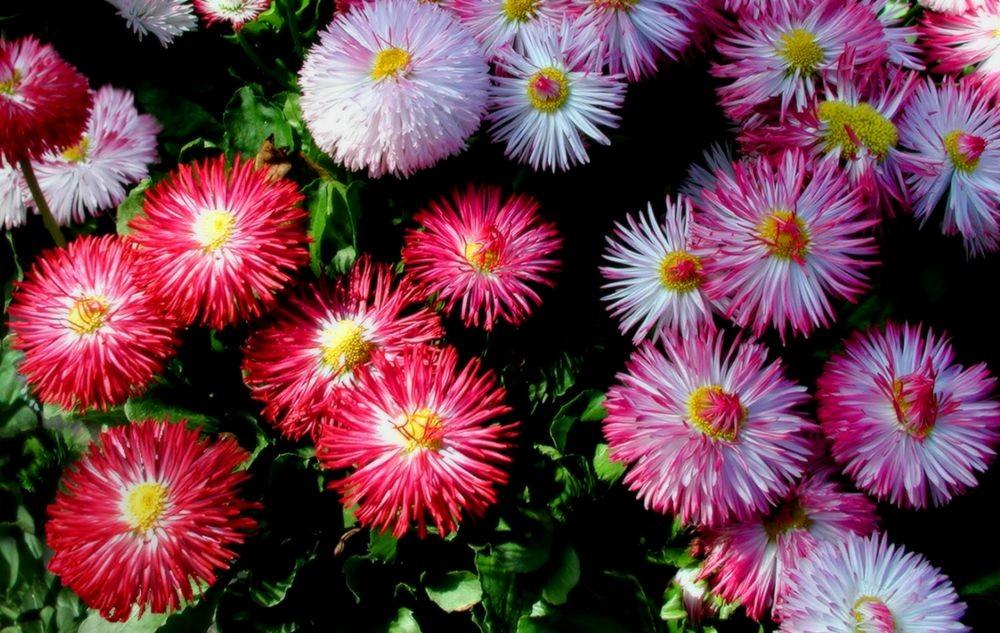 花卉日记-74_图1-15