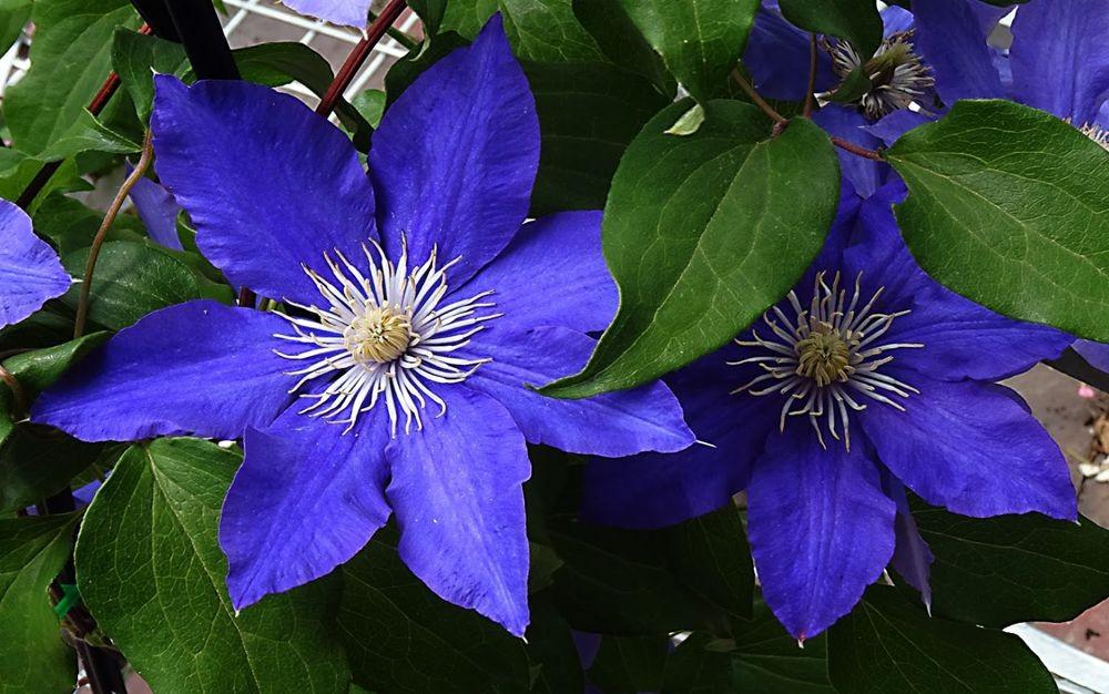 花卉日记-74_图1-18