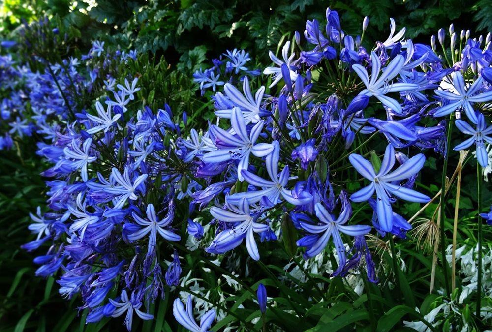 花卉日记-74_图1-20