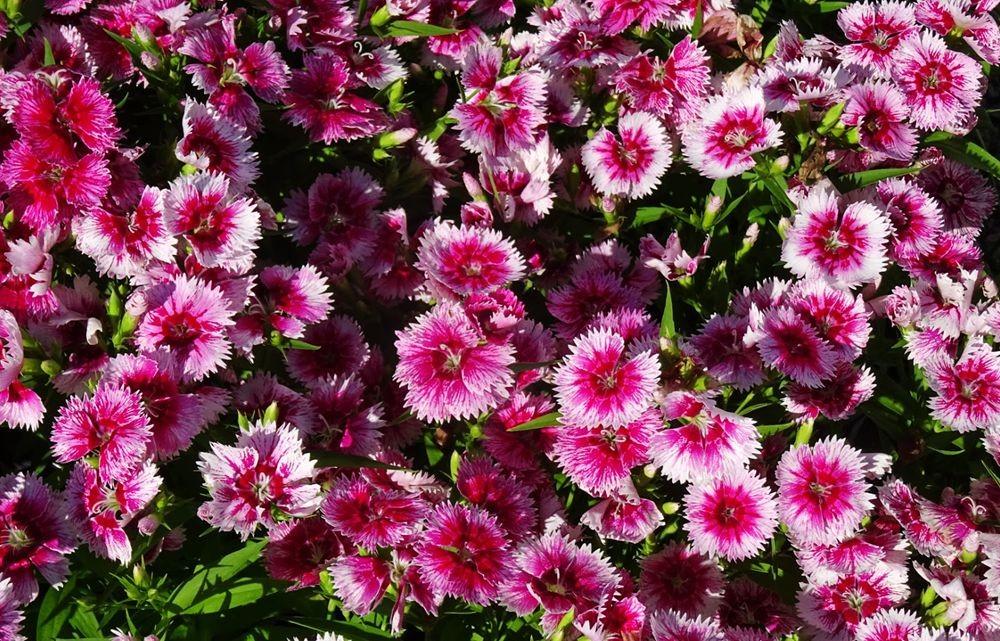 花卉日记-74_图1-23