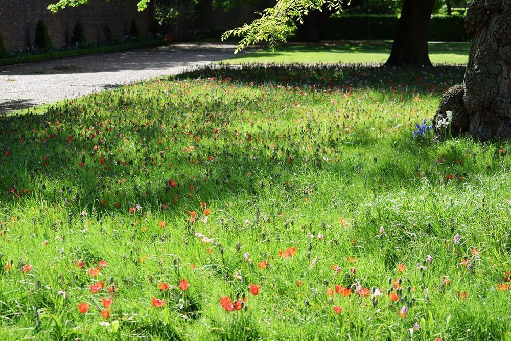 伦敦里土满公园的花花草草_图1-27
