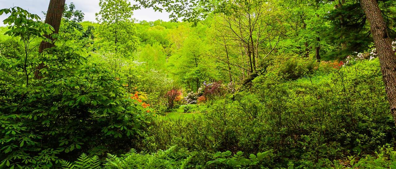 滨州詹金斯植物园(Jenkins Arboretum),一步一景_图1-9