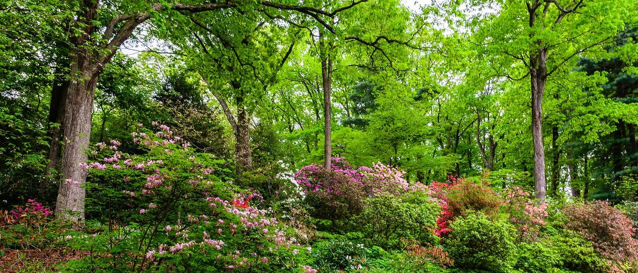 滨州詹金斯植物园(Jenkins Arboretum),一步一景_图1-8